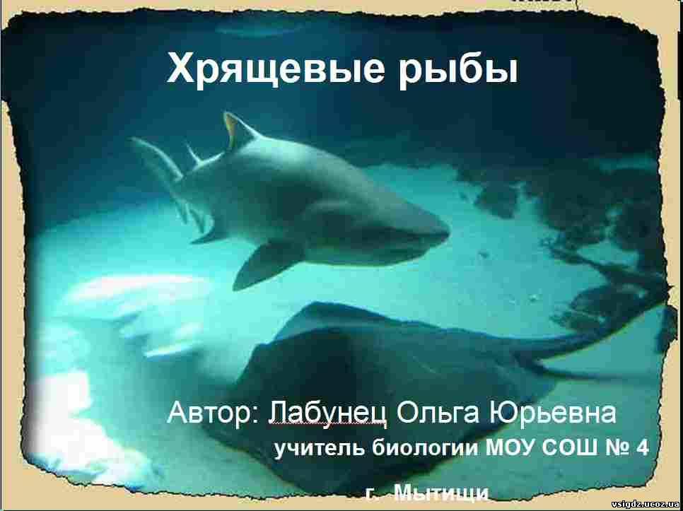 Презентація на тему - Хрящові риби